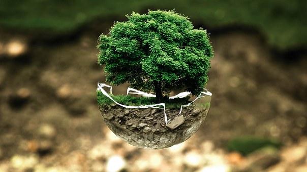 petit arbre planté dans une demi-sphère qui représente la Terre